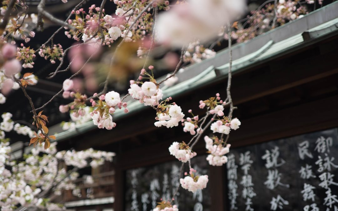 Peach Blossom: Activating your Attraction & Romance Luck in 2018