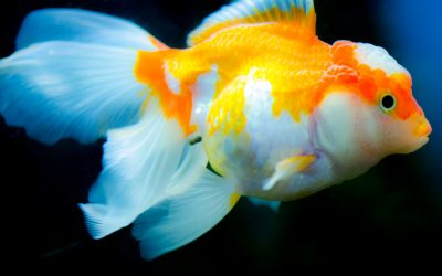 The Benefits of Water Features and Fish Aquariums