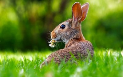 Keeping the home fires burning: the Fire Rabbit Month, 2019